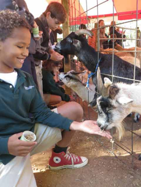 Young boy enjoying the petting zoo at Pettit Creek Farms